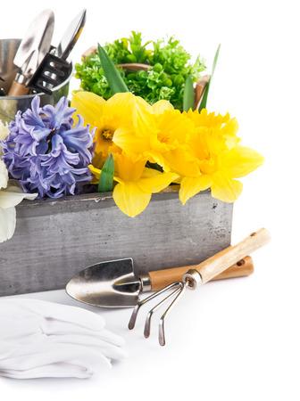 arreglo floral: Flores de primavera en caja de madera con herramientas de jardín. Aislado en el fondo blanco Foto de archivo