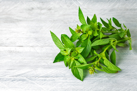 enumeration: Bundle fresh basil on wooden board