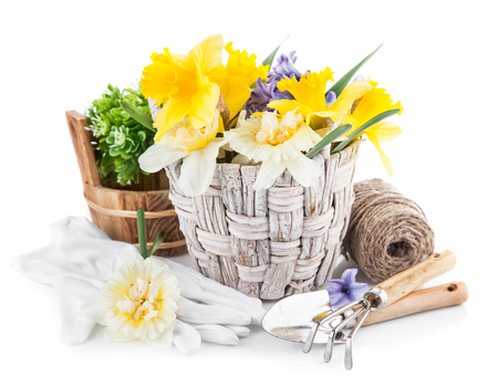 enumeration: Spring flowers in basket with garden tools. Isolated on white background
