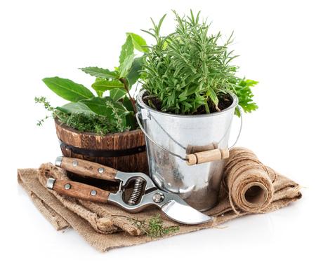 Verse groene kruiden met tuingereedschap. Geïsoleerd op witte achtergrond
