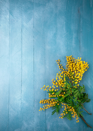 mimose: Ramo fiorito mimose sul blu tavola di legno vista dall'alto con copyspace