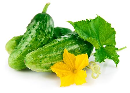 Verse groene komkommer met blad en bloem natuurlijke groenten biologisch voedsel op een witte achtergrond