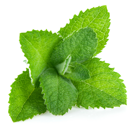 Fresh leaf mint green herbs ingredient for mojito drink, isolated on white background