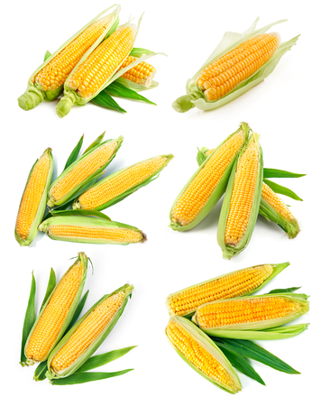harvest background: Set fresh corn with green leaf harvest vegetables healthy food, isolated on white background