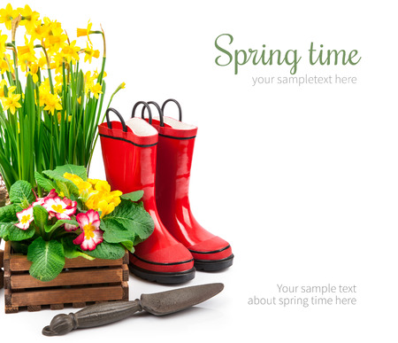 Spring flowers narcissus in basket with branch mimosa red boots and gardening tools for garden work, isolated on white background Stock Photo