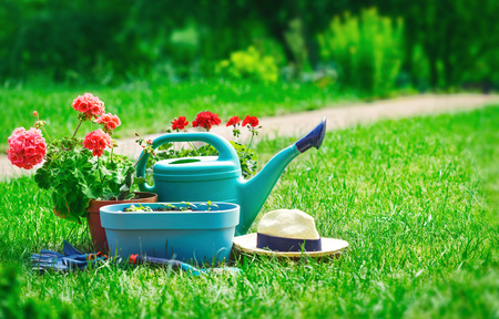 Home gardening and flower-growing still-life of flower in pot with watering can garden tools on green grass. Stock Photo