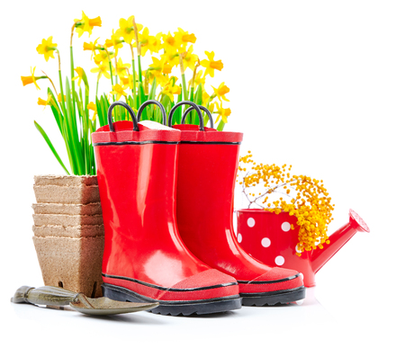 Spring gardening flower narcissus still life with red boots and garden tools, isolated on white background. Stock Photo