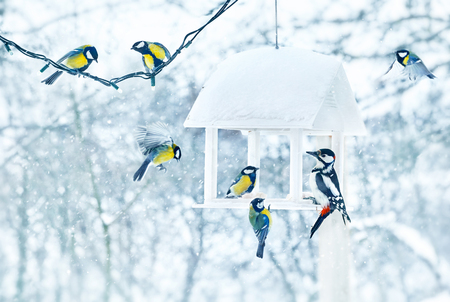 Tit and woodpecker birds in white wooden feeder winter snowy frosty day on nature. Standard-Bild