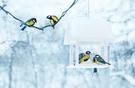 Tit birds in white wooden feeder winter snowy frosty day on nature.