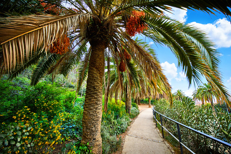 Barcelona, Spain. Park Guell. Antonio Gaudi. Tropical palm trees among green flowers, bushes and plants. Imagens