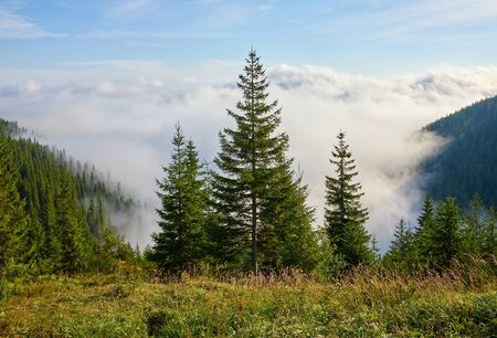 Firtrees on glade in mountains above haze and white clouds. Stockfoto