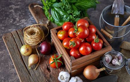 Harvest tomatoes in wooden box spicy herbs and spice at old board in rustic style. Stockfoto - 130832228