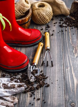 Garden red boot with seedlings tomato ground in pot glove and tools on old wooden board rustic style.