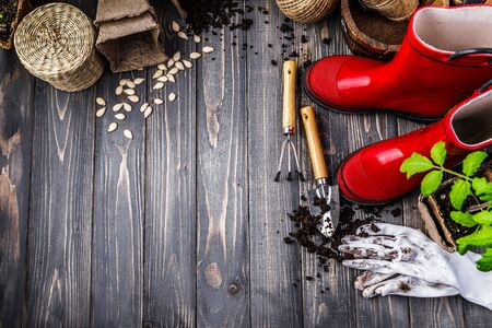 Gardening tools with soil red boots and seedlings tomato on wooden board in rustic style.