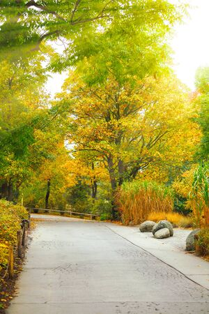 Autumn park with yellow trees and paved walkway picturesque landscape in deserted.