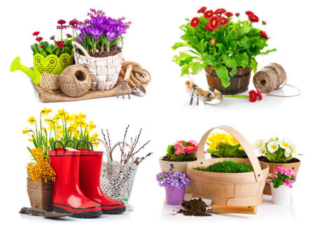 Collage mix set of Garden spring flowers crocus in wicker basket with watering can tools. Isolated on white background