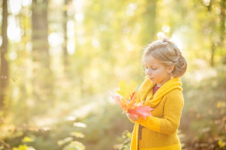 Little Child Baby Girl Caucasian Playing with Leaf,Autumn Nature background.Cute blonde blue-eyed girl in yellow knitted coat in the autumn park with yellow leaves in hands, smiling
