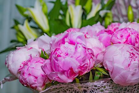 fresh bright blooming peonies flowers with dew drops on petals. pink bud.Copy space.Blooming peony close-up. Wedding backdrop, Valentines Day concept. Birthday bouquet, bunch. Big bouquet