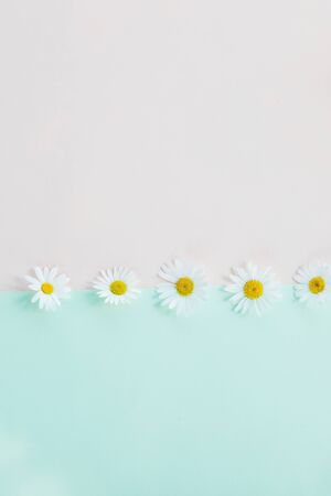 Fresh, white chamomiles or daisies isolated on pastel bachground. Soft light color. Greeting card. Mockup for positive idea. Empty place for inspirational, emotional text.Pattern made of daisy flowers Stockfoto