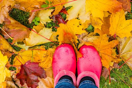 Rainy autumn. Rubber pink boots against of wet yellow leaves.Conceptual image of legs in boots on the autumn leaves. Feet shoes walking in park.maple leaves on a wet grass. Autumn season