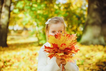 Autumn portrait of cute curly girl.Little funny girl playing with yellow leaves in the forest. Child on a walk in the autumn park. Golden autumn. toddler girl , portrait with bouquet of autumn leaves 写真素材
