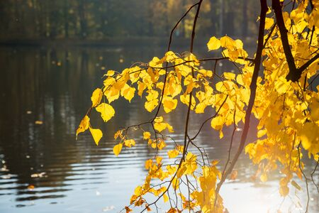 Autumn Landscape. bright colors of autumn in the park by the lake.colorful leaves on trees, morning at river after rainy night. Picturesque autumn landscape of river and bright trees and bushes