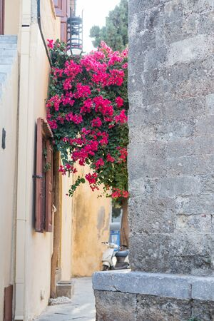 Old narrow street in small city in Europe. Flowering bougainvillea trees in front of old stone buildings in Greece. Street with Bougainvillea flowers and old building.Magenta blooming bush Фото со стока