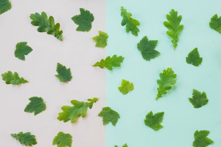 Pattern with leaves, jasmine, white background, lay flat, the top view.