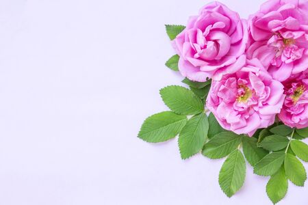 Pink roses bouquet with free space for text. Background for the postcard. Top view.