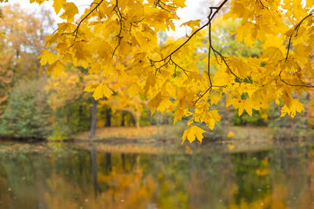Autumn colorful foliage over lake or pond with beautiful woods in red and yellow color.Idyllic autumn lake scenery. River in a delightful autumn forest at sunny day