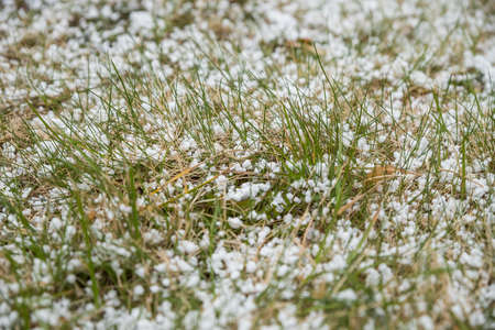 A close-up shot of green grass covered by hoarfrost on a winter morning in a forest, meadow.ice-covered frozen lawn with fallen leaves, old grass after freezing rain on cold day Banco de Imagens