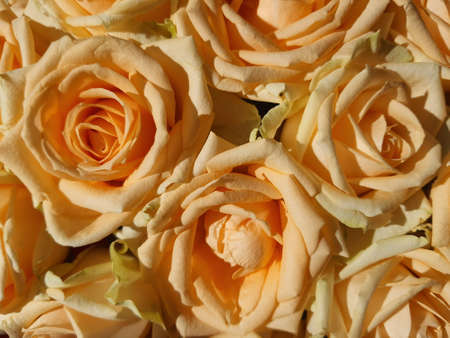 Luxurious bouquet of hybrid tea roses in yellow, orange, peach and apricot colors. Closeup still life photo of blooming flowers. floral art studio image.blooming orange rose Banco de Imagens