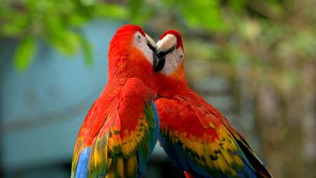 Rare birds from world zoos, macaw, Wildlife