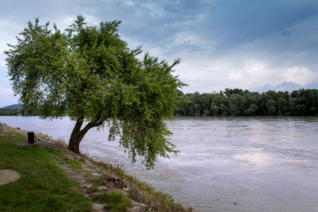 confluence: Tree and River. Early summer cloudy evening. Tree beside a river and forest on the other side.