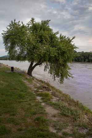 to the other side: Tree and River. Early summer cloudy evening. Tree beside a river and forest on the other side.