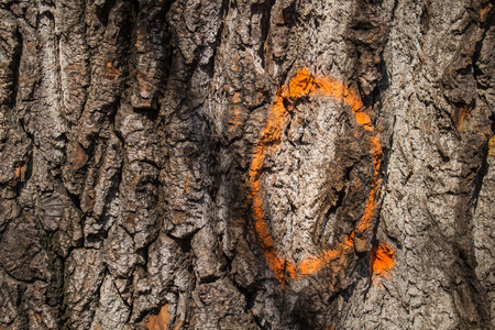 numeracy: Painted in a bright color on the old tree trunk, enlightened by sun.
