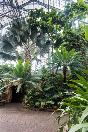 Glasshouse With Tropical Vegetation. Various Trees, Palms, Plants ...