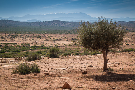 sandy soil: Orange sandy soil of a stone desert in Morocco. Argan tree in the foreground. In the background Atlas Mountains with a snow on the top. Cloudy sky. Foto de archivo