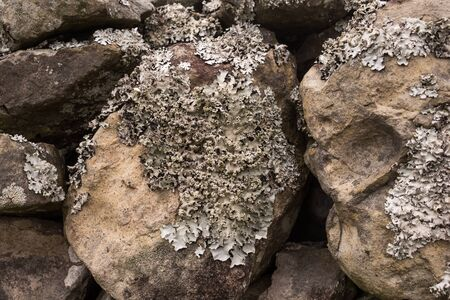 Macro view on a structure of a lichen, growing on a stones in a forest, creating an abstract texture. Sao Miguel, Azores Islands, Portugal.