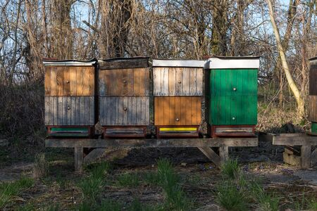 Colorful hives in a forest in an early spring, surrounded by trees, which have no leaves as yet. Blue sky. Most pri Bratislave, Slovakia. 스톡 콘텐츠