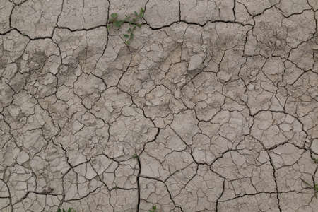 Cracked dry soil on the field during the hot summer, creating an abstract structure. West of Slovakia.