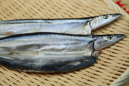 The opening of saury photo