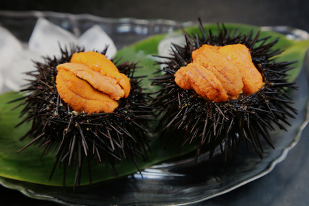 Sea urchin Standard-Bild