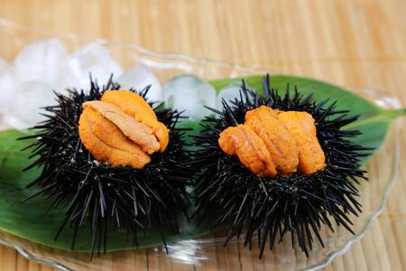 urchin: Sea urchin Stock Photo