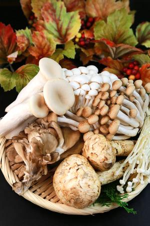 Various mushrooms photo