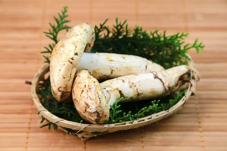 Matsutake mushroom photo