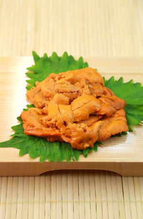 echinoderm: Sea urchin Stock Photo