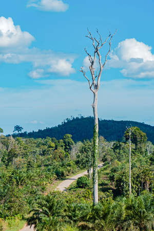 The Edge Of The Forest With Beautiful Views Of Big Tree In Berau, East Kalimantan, indonesia