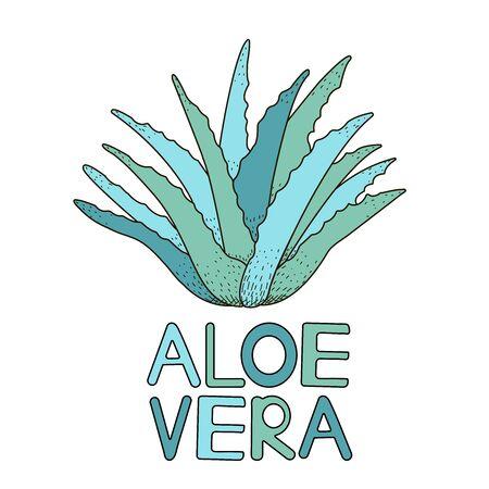 Aloe vera. Green plant. Vector illustration