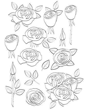 Roses. Coloring page. Vector illustration.